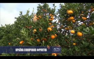 ВИСТАВКА «AGROEXPO 2020» (IZMIR, TURKEY)