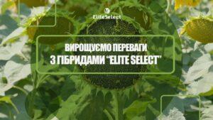 ГІБРИД СОНЯШНИКУ «АЛЬФА» (компанія Elite Select)