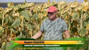 Фермер Вадим Подолян: «Сію тільки гібриди соняшнику «Elite Select» і результатом дуже задоволений!»